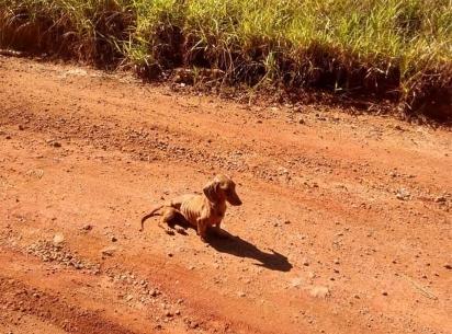 O cachorrinho foi encontrado em uma estrada na qual Ladislau Alcântara e Rosilene Jansen pedalavam. (Foto: Instagram/pelanka_dachsund)