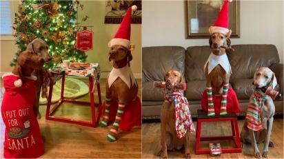 Dona caracteriza os seus cães com trajes natalinos e faz registros hilários. (Foto: Facebook/Linda Kush)