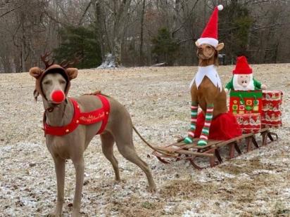 Linda decidiu caracterizar seus cachorros do dia 1º de dezembro até o Natal. Nessa foto Roxie está sendo puxado por Riley. (Foto: Facebook/Linda Kush)
