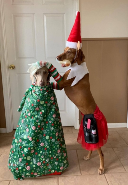 Os cachorros parecem se divertir com as travessuras da dona. Nessa foto estão num salão de beleza. (Foto: Facebook/Linda Kush)