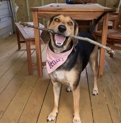 A cadela Penny foi adotada pela família no abrigo Northeast Animal Shelter em Salem, Massachusetts. (Foto: Arquivo Pessoal/Deanna Greenstein)
