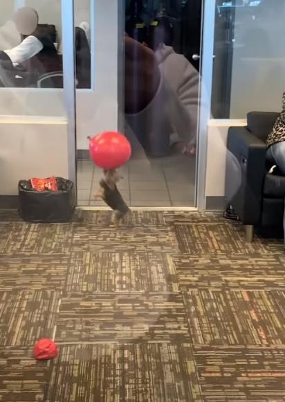 Quem estava sentado esperando ser atendido se alegrou e interagiu com a brincadeira do cachorrinho. (Foto: Reprodução Facebook/ViralHog)