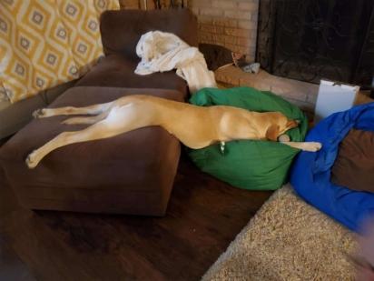 Suas posições são aparentemente desconfortáveis. (Foto: Arquivo Pessoal/Kimberley Spencer)
