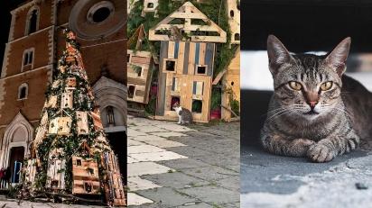 Gatos de rua invadem árvore de Natal decorada na Itália. (Fotos: Giuseppe Perro/Facebook | Lucas Guimarães/Pexels)