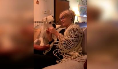 O cão demonstra muito interesse em aprender o que a dona está ensinando.(Foto: Reprodução/TikTok)