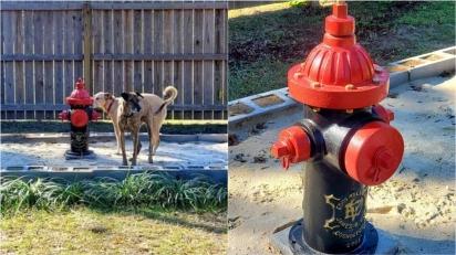 Casal instala hidrante em seu quintal para que seus cães urinem apenas no espaço reservado. (Foto: Facebook/Tara Maclnnes)