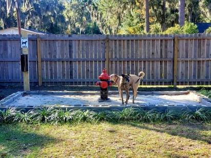 A solução para os cães pararem de urinar todo o pátio foi instalar um hidrante no meio do jardim e parece que funcionou. (Foto: Facebook/Tara Maclnnes)