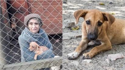 Mesmo vivendo em condições de escassez, idosa acolhe 16 cães que foram abandonados em seu portão. (Foto: Reprodução/RBB)
