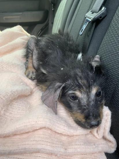 Caitie Evers começou a trabalhar com a causa animal em 2013, ao encontrar um cachorrinho ferido em uma rodovia. (Foto: Instagram/caitiesfosterfam)
