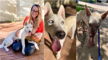 Mulher que ajudou a resgatar mais de 200 cães usa Instagram para divulgar casos e encontrar lares permanentes. (Foto: Instagram/caitiesfosterfam)
