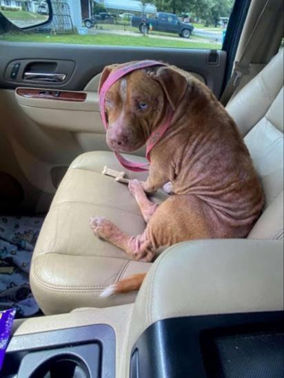 Jayme foi ao posto de gasolina e resgatou o pit bull. (Foto: Arquivo Pessoal/Aaron Peters)