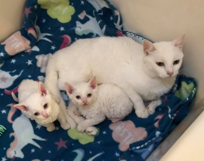 Os gatinhos foram levados ao veterinário. (Foto: Instagram/catsnipetc)