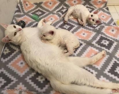 Na consulta descobriram que os filhotes tinham doença respiratória, problemas estomacais e além de terem muitas pulgas. (Foto: Instagram/catsnipetc)