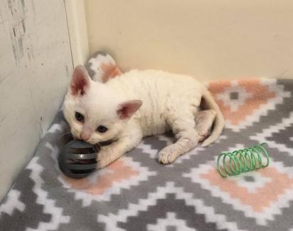Os gatinhos agora saudáveis serão disponibilizados para adoção. (Foto: Instagram/catsnipetc)
