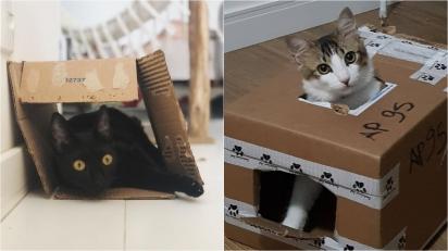 Conheça alguns motivos dos gatos gostarem da caixa de papelão. (Foto: Instagram/ mini.minuscula | Foto: Instagram/somosotomejerry)