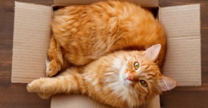 Os gatos gostam de caixas por se sentirem seguros e confortáveis. (Foto: Reprodução/Purina)