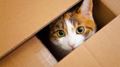 Ter um lugar aparentemente escondido ajuda o gato a lidar com o processo de mudança. (Foto: Reprodução/Purina)