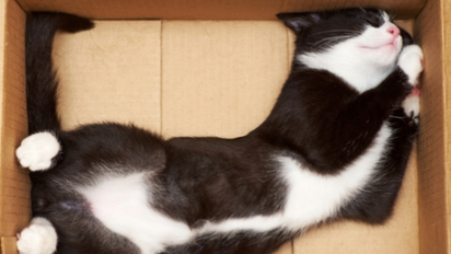 A caixa aparentemente é o lugar perfeito para os felinos dormirem. (Foto: Reprodução/Purina)