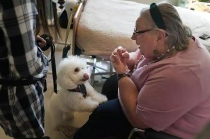 Eileen Nagle, 79, com Zeus. (Foto: Reprodução/Associated Press)