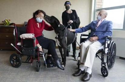 Sal Markowitz, 96, à direita, e Sandra Greer, 82, à esquerda, recebendo a visita de Marley, um Dogue Alemão. (Foto: Reprodução/Associated Press)