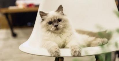 Os gatos são animais silenciosos. (Foto: Reprodução/Fresh Pet)