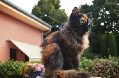 Os gatos são independentes. (Foto: Reprodução/Fresh Pet)