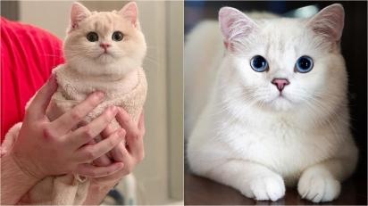 Razões pelas quais os gatos são excelentes animais de estimação para você adotar agora mesmo. (Foto: Instagram/sweetmeowss | Instagram/jajang_donald)