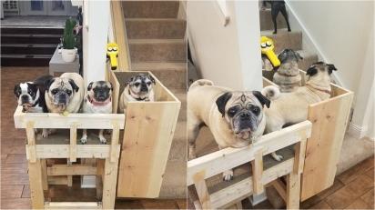 Casal constrói cadeira elevatória na escada de casa para o conforto e a segurança dos seus cães idosos. (Foto: Reprodução/Mercury Press & Media Ltd)
