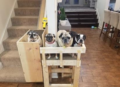 Os cães parecem ter gostado da ideia. (Foto: Reprodução/Mercury Press & Media Ltd)