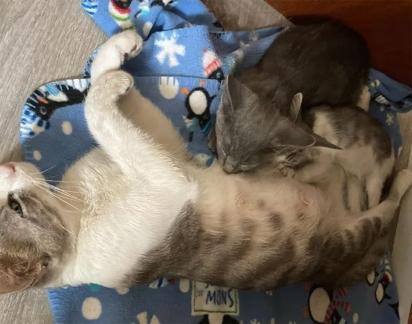 A família decidiu contatar o centro de resgate de animais para encaminhar os gatos a lares adotivos. (Foto: Facebook/Alley Cat Rescue)