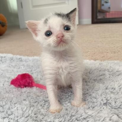 Heather não mediu esforços para ajudar a gatinha a sobreviver. (Foto: Instagram/fostermotherofkittens)