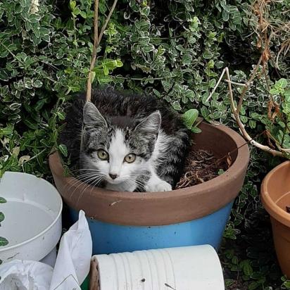 O gatinho foi encontrado no jardim da Klarieke. (Foto: Instagram/la_riek)
