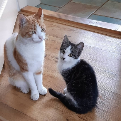 A dona de Stravos, Klarieke, decidiu adotar o gatinho. (Foto: Instagram/la_riek)