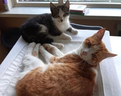 Os dois gatinhos fizeram uma linda amizade. (Foto: Instagram/la_riek)