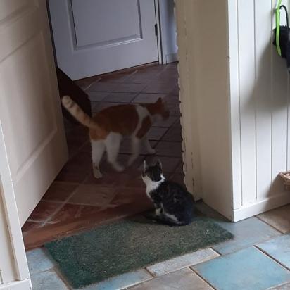 Stavros incentivou o seu amigo gatinho a entrar em casa. (Foto: Instagram/la_riek)