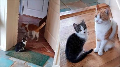 Gato faz amizade com outro filhote, o leva para casa e obriga família a adotá-lo. (Foto: Instagram/la_riek)