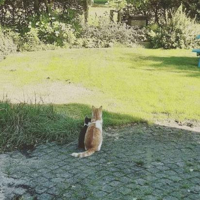 Os dois gatinhos viviam brincando juntos pelo jardim. (Foto: Instagram/la_riek)