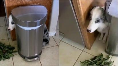 Cachorrinha arranca hortaliças da mãe e faz cara de remorso em vídeo hilário. (Foto: Reddit/@Texas_OT)