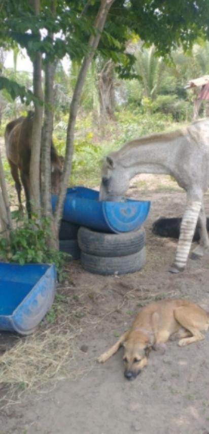 O cão está sempre por perto do cavalo para protegê-lo. (Foto: Arquivo Pessoal/Fernando Machado)