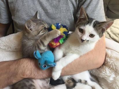 Lou fez amizade com a gatinha Griotte. (Foto: Facebook/@Rescuechatonsmontrea)