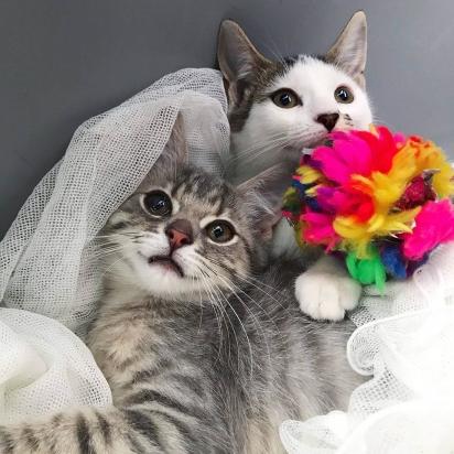 As duas gatinhas se tornaram grandes amigas. (Foto: Facebook/@Rescuechatonsmontrea)