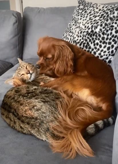 A amizade da dupla é encantadora. (Foto: TikTok/@teddyandalbiofficial)