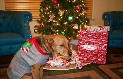 Parece que alguém não parece nenhum pouco feliz com o seu suéter natalino… (Foto: Divulgação/Bored Panda)
