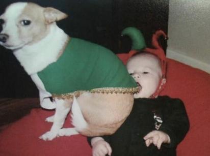 Este chihuahua se vingou de sua fantasia de elfo de Natal sentando em seu irmão humano. (Foto: Divulgação/Bored Panda)