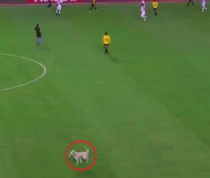 Cachorro de rua invade partida de futebol na Bolívia. (Foto: Reprodução Twitter/Guardian Sport)
