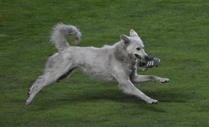 O cachorro entrou em campo carregando uma chuteira na boca. (Foto:Reprodução Twitter / Agencia Boliviana de Información)