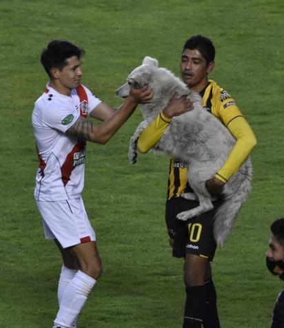 O jogador Raúl Castro (camiseta amarela) adotou o cachorro. (Foto: Reprodução Twitter/Agencia Boliviana de Información)