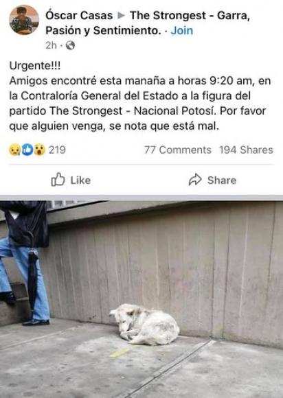 Horas antes um homem compartilhou uma foto do cachorro de rua. (Foto:Facebook/Óscar Casas via The Strongest - Garra, Pasión y Sentimiento.)