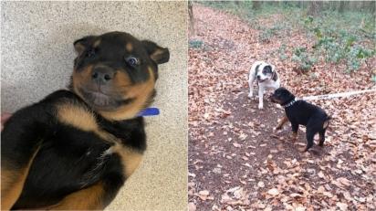Cão cego que foi encontrado abandonado em parque é adotado e cria vínculo amoroso com irmã canina. (Foto: Reprodução/ Battersea)