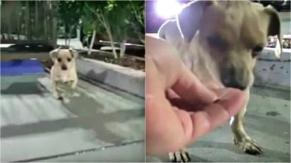Filhote que foi encontrado implorando por comida em estacionamento de mercado é resgatado. (Foto: Hope For Paws - Official Rescue Channel)